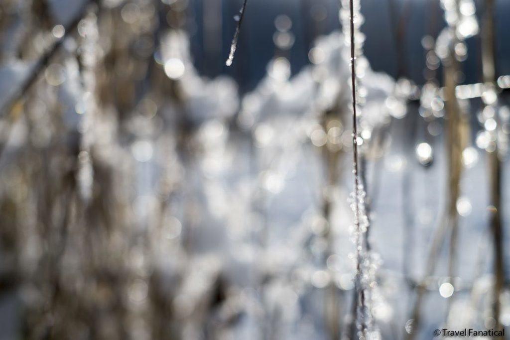Bokeh and Snow