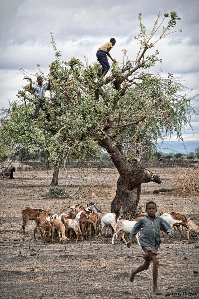 Boys in trees in Tanzania