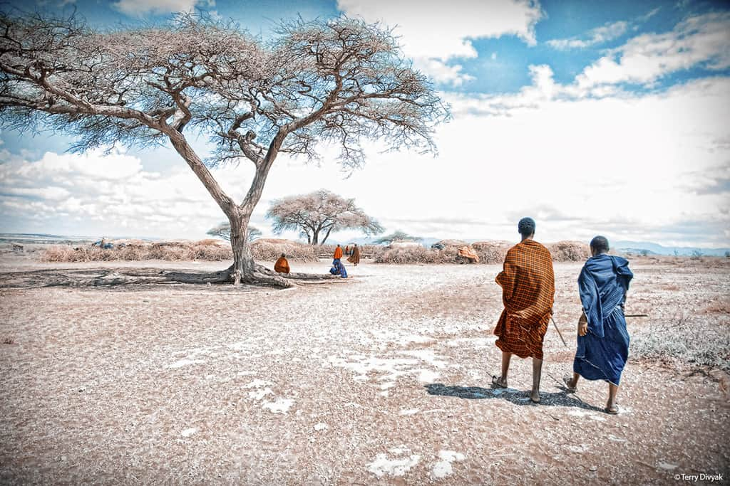 Maasai with large tree